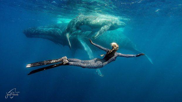ocean ramsey sharks