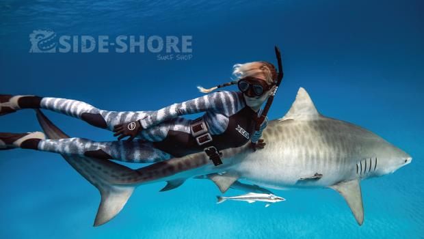 combi requin